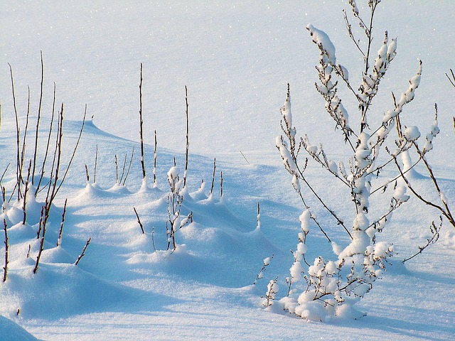 Winter, The Frost, Frost - Free image - 234721
