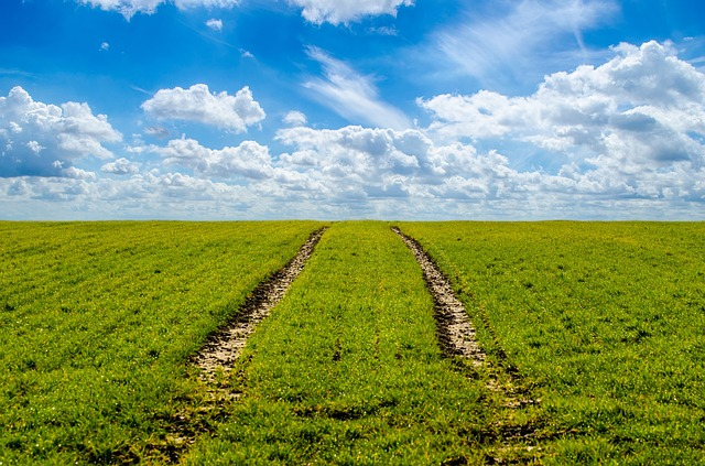 Grass, Green, Agriculture, Farming - Free image - 316667